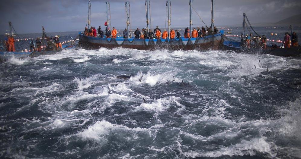 atún rojo de España